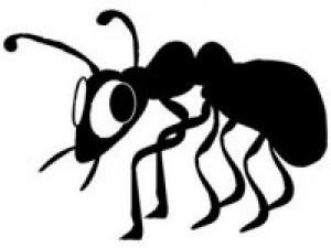 Sacar las hormigas del hogar