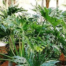 Si tienen plantas en la terraza, en el jardín, en el balcón o donde fuere, no se pueden perder el artículo de hoy donde hablaremos de abono casero para ellas.  Sabemos que las plantas necesitan sus cuidados y una de las mejores formas para lograr esto es abonando, justamente, la tierra donde las tenemos. Ya sea en macetas o en la tierra. Vamos a ver de qué va esto.