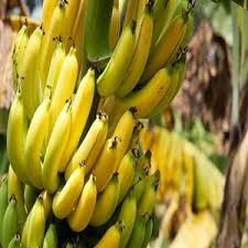 beneficios de la banana para mujeres