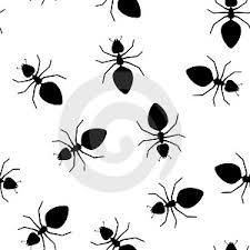 ¿Qué trucos para combatir las hormigas saben ustedes?