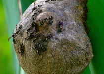 evitar que las avispas hagan nidos