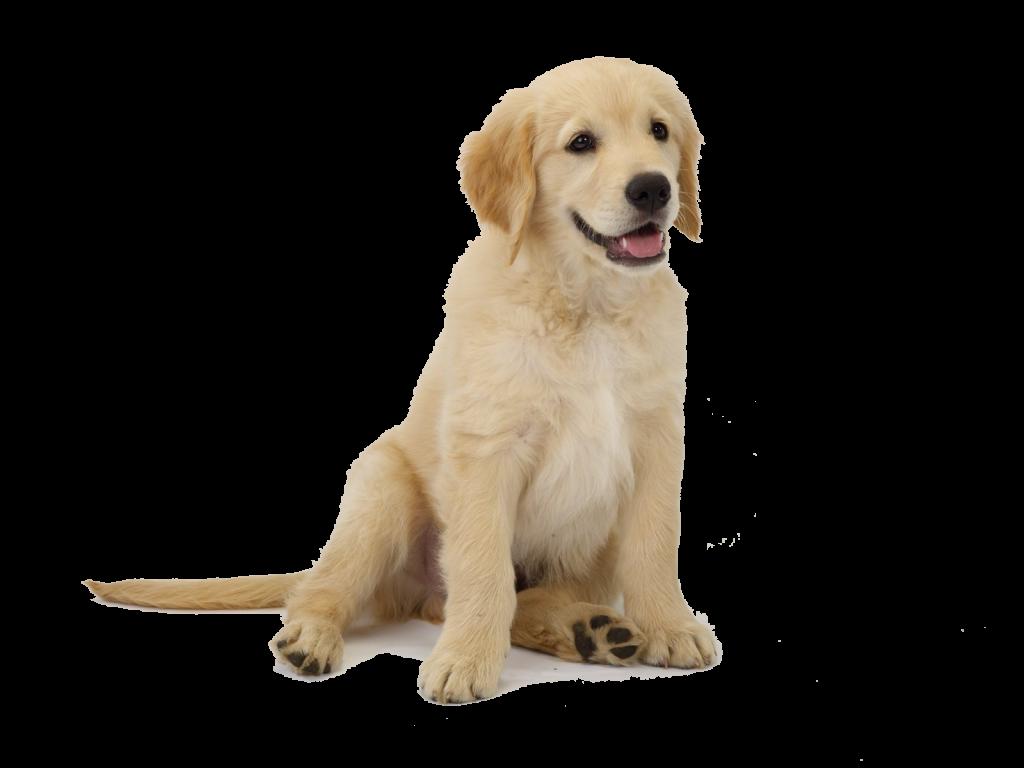 Sacar el olor a perro de la ropa te decimos c mo - Como quitar el olor a humedad en la ropa ...