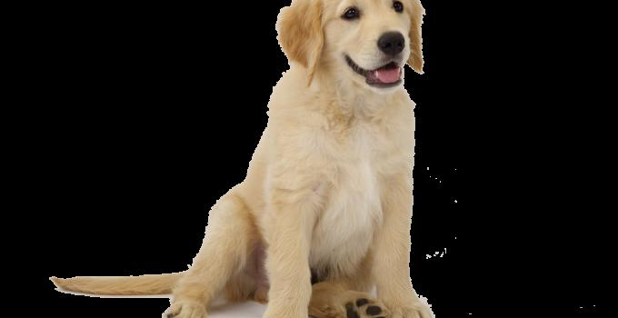 quitar el olor a perro