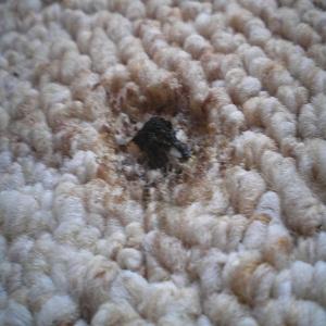 quitar quemadura de una alfombra